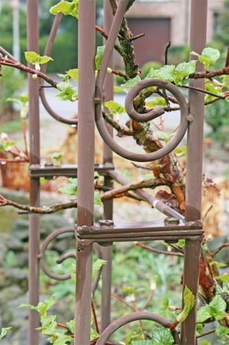 Gemeinsame Garten - Rosenbogen @OC_31